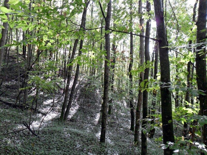 В лесу, окрестности Горячего ключа, октябрь 2010