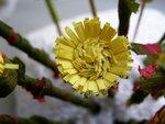 Как сделать цветы мать и мачехи из бумаги