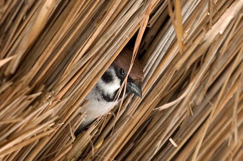 пришла много птиц собирается на крышах конечного результата зависит