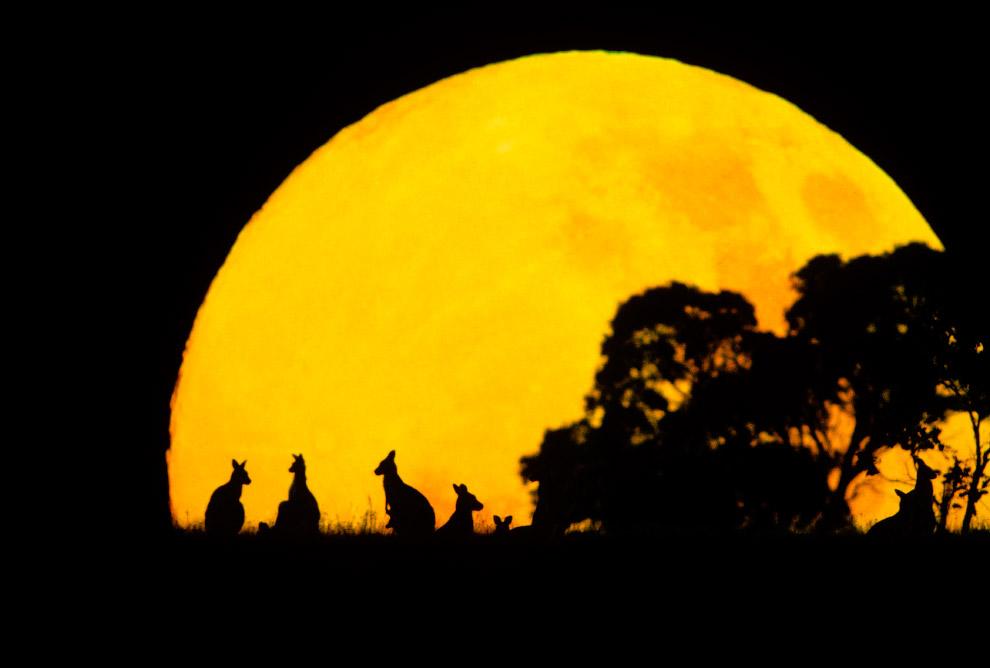 17. Африканские антилопы.