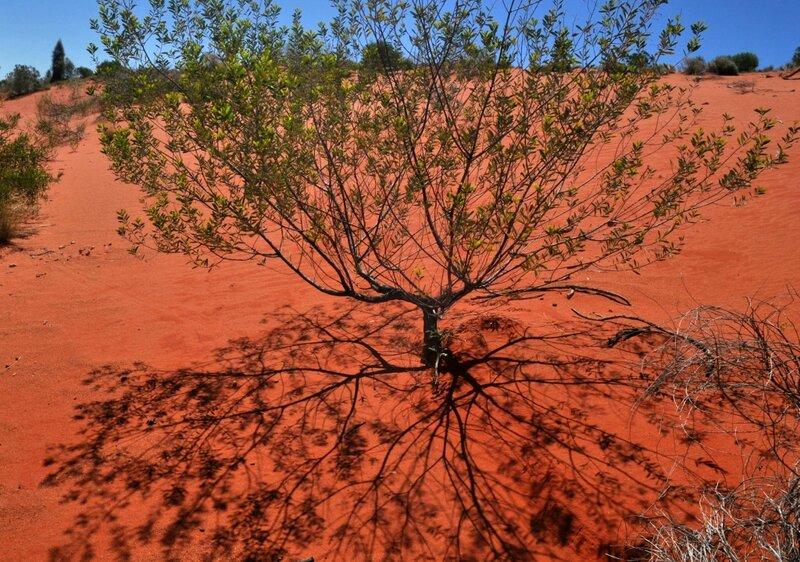 Дерево и тень
