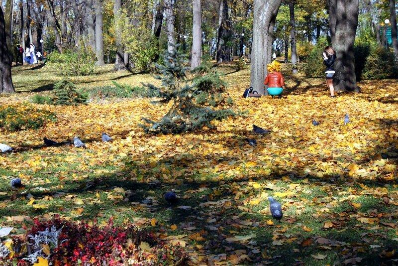 Голуби пасутся в опавшей листве