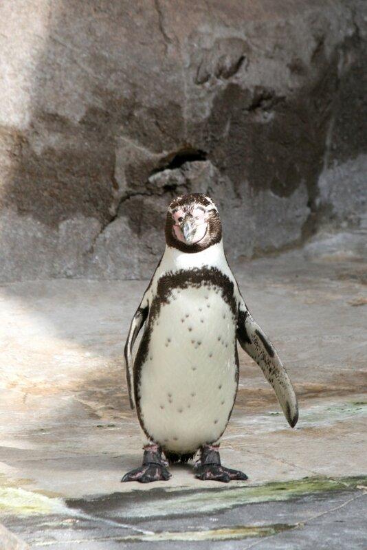 Тенерифе, пингвины в Джангл Парке