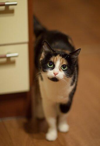 Про кошек 0_5c794_bf9df5b3_L