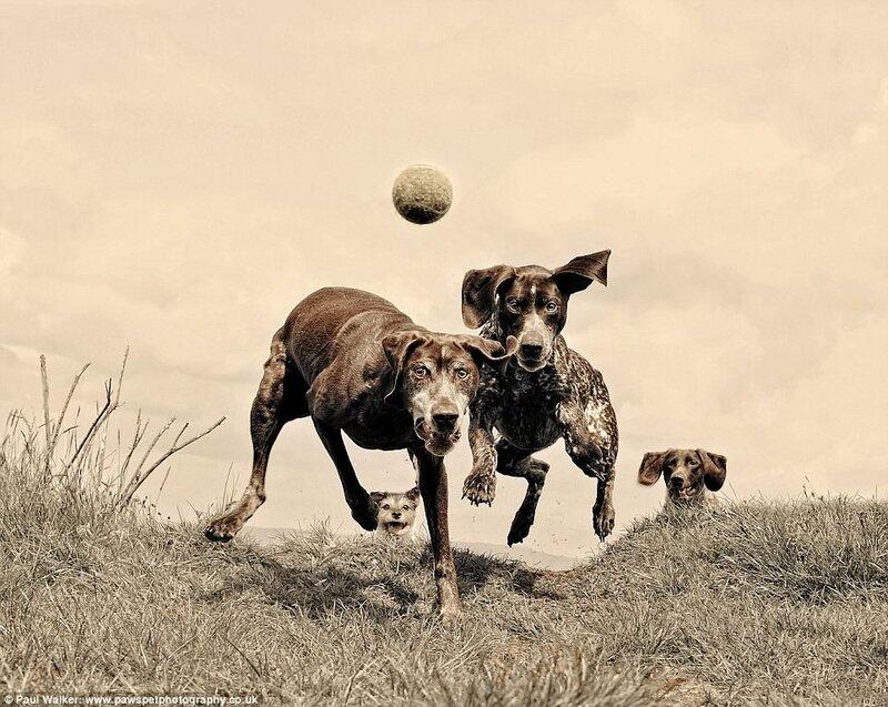Photogpher Paul Walker