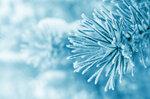 Winter (5).jpg