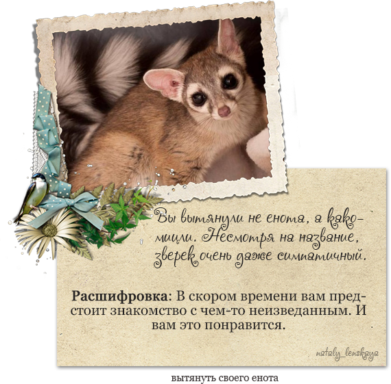 Мой енот)))