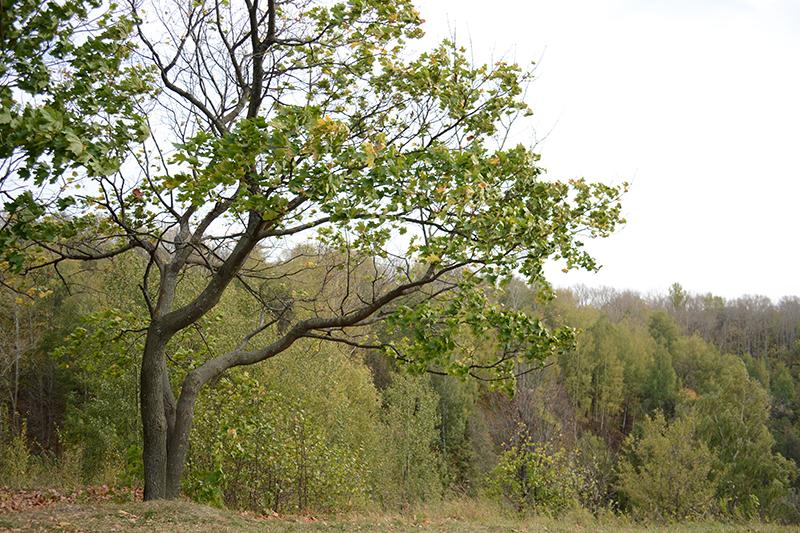зеленая осень
