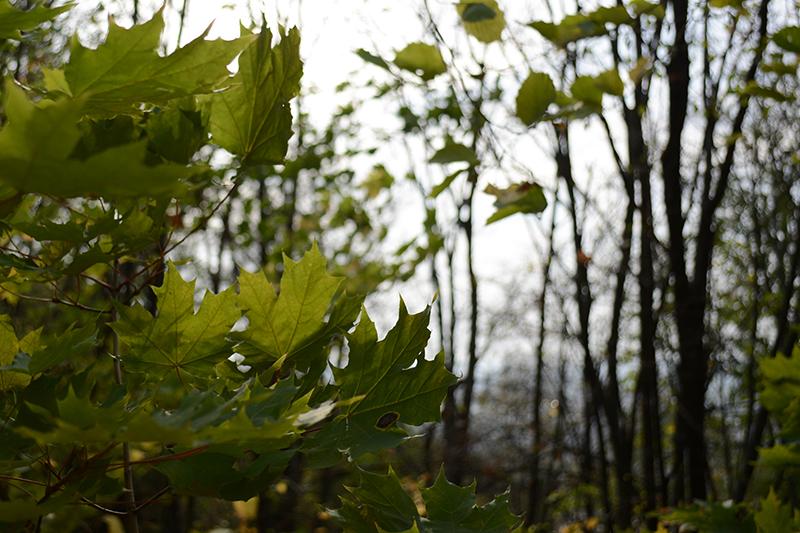 зеленая осень4