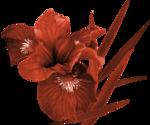 Цветок.png