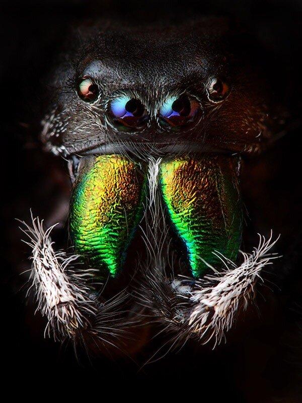 Прыгающие пауки: 2