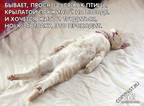 http://img-fotki.yandex.ru/get/5003/e619ev.fe/0_4bfb1_6c7997c_L.jpg