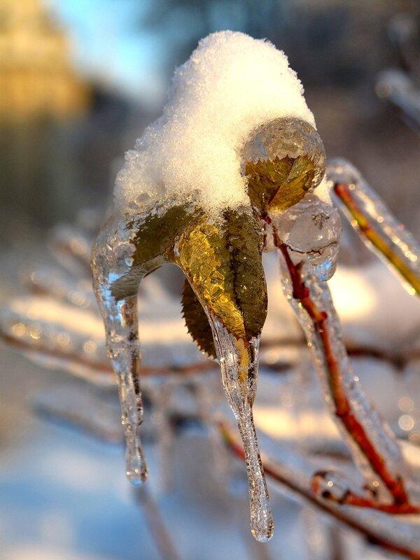 Зима,с.Остров, подворье,ледяной плен