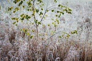 Желтый код в связи с похолоданием — продлён