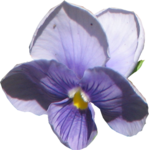 ial_sng_violet1.png