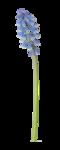 natali_design_blossom_flower12.png