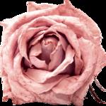 Vintage_Roses_Lilas_el (35).png