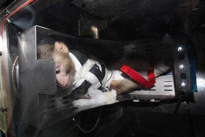 Иран запустил в космос вторую обезьяну