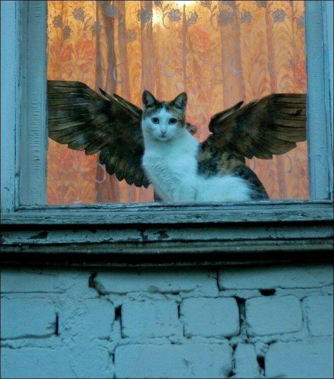 кот-ангел