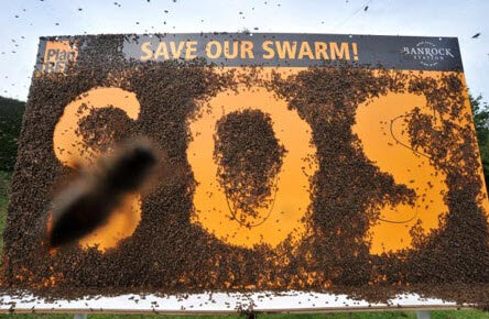 SOS вымирание пчел