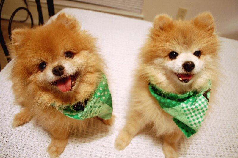 собаки мишки фото