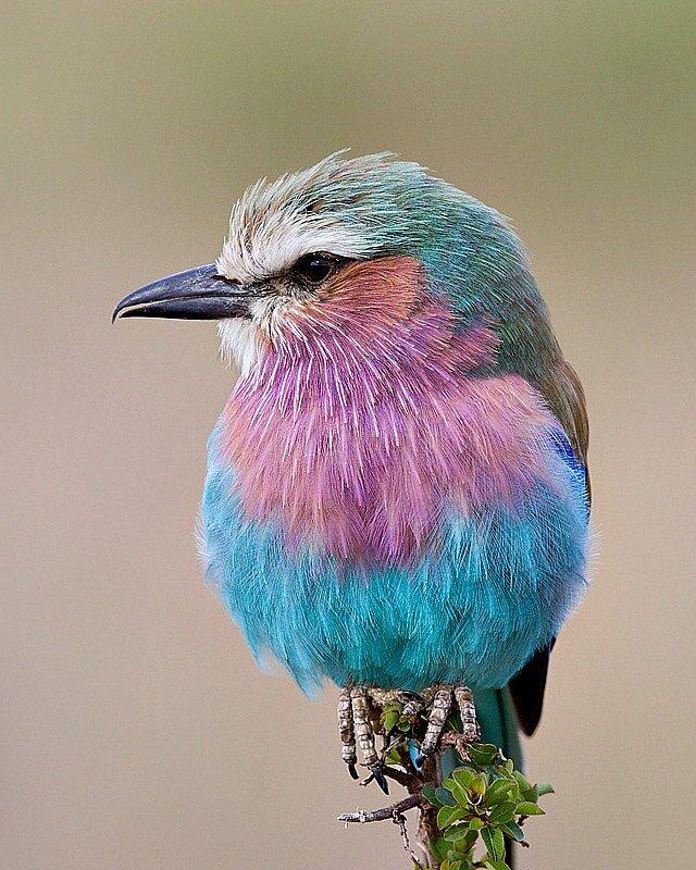 ...подборки фотографий на тему- Красочный мир птиц.