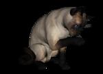 сиамские кошки (8).png
