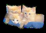 Кошки 5 0_50a0d_10dd2de6_S