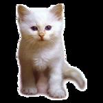 Кошки 5 0_50a21_c6c38ee8_S