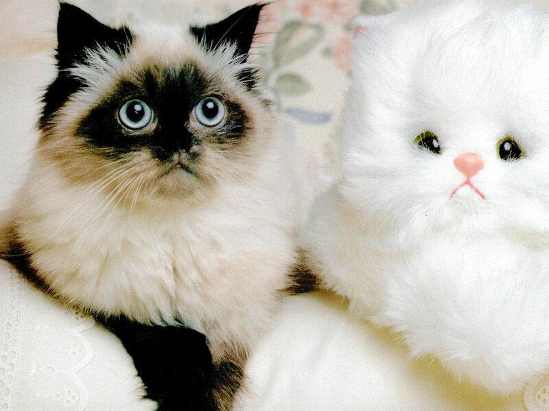 Кошки  0_5293f_e1dccdb0_XL