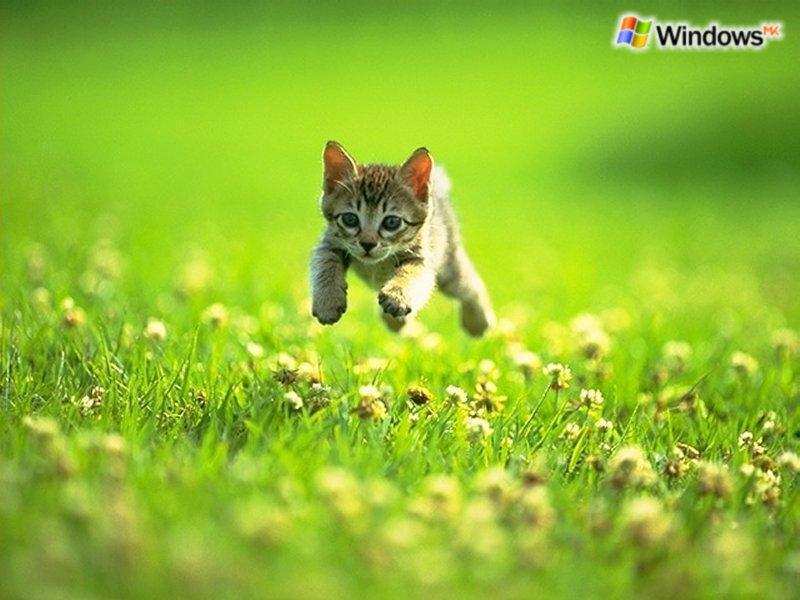 Кошки  0_52959_1138f55a_XL