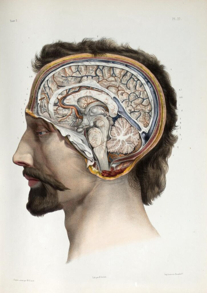Nicolas Henri Jacob - Brain