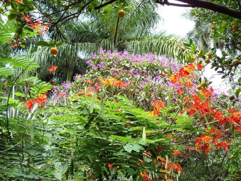 тропический сад