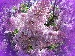 красивая фотка весны