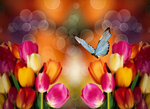 Tulips (4).jpg
