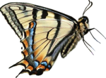 priss_laprimavera_butterfly3.png