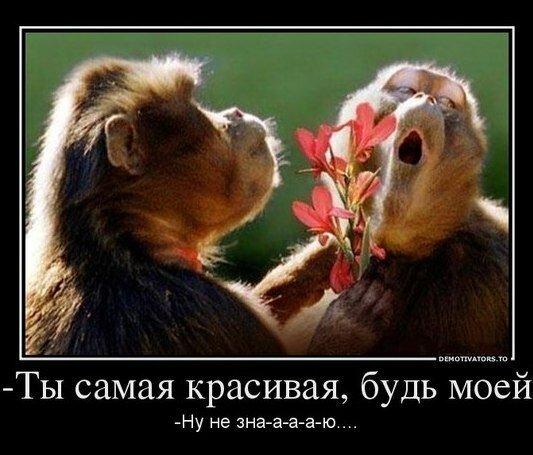 http://img-fotki.yandex.ru/get/5005/220630590.4/0_e8df9_39bbcd3a_XL.jpg