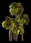 Palms  (27).png