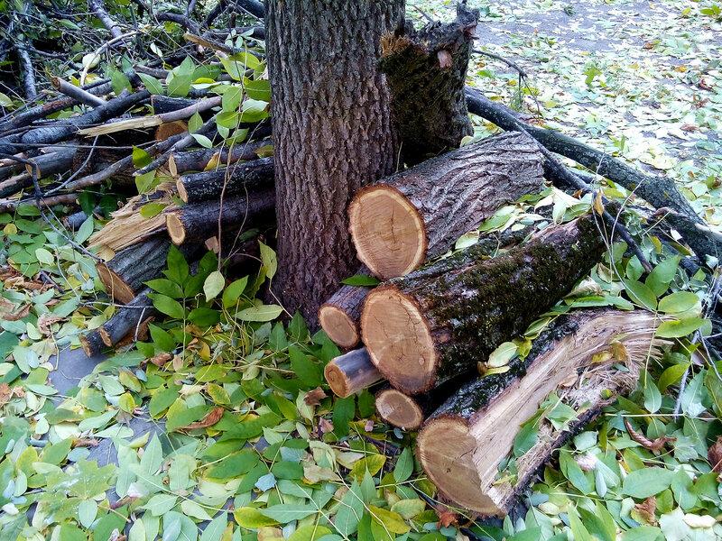 Артефакты осени-дрова.jpg