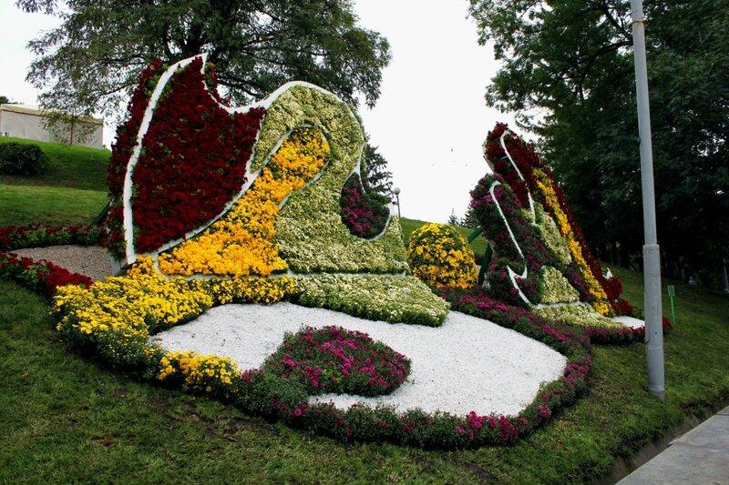 Выставка осенних цветов в Киеве