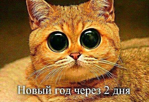 До Нового года ДВА  дня...))))