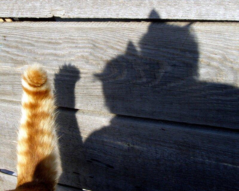 Ля Мур-р!.. Он будет ей при лунном свете – Петь серенады про Ля Мур, На «мяу» громкое ответит Принцесса-кошка нежным «мур-р».