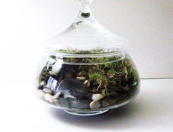 Террариумы, флорариумы, сады в бутылках - украшение нашего дома