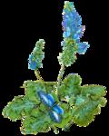 Woodruff_BlueButterflys_mm.png
