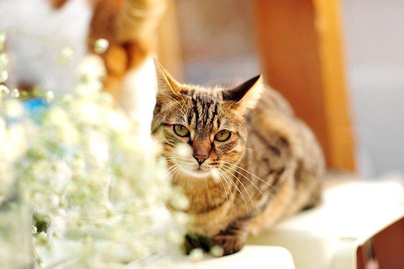 Кошки  0_52913_8a8bc618_XL