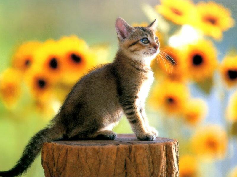 Кошки  0_52937_8fe0bb8d_XL