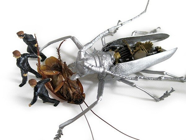 чучела насекомых