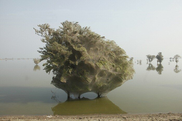 паутина на деревьях