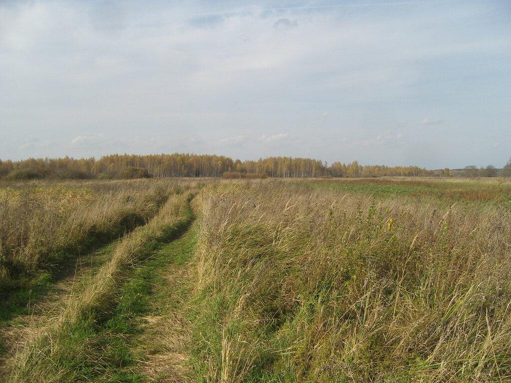 колея в октябрьской траве