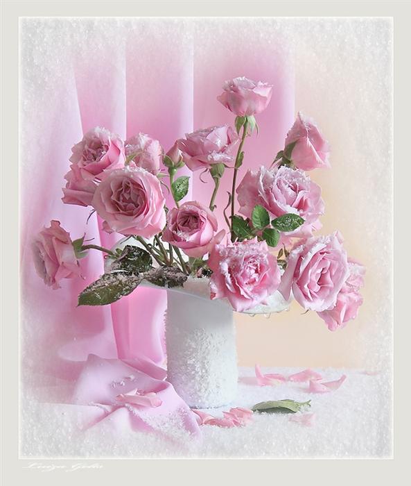 Троянди усипані снігом листівка фото привітання малюнок картинка